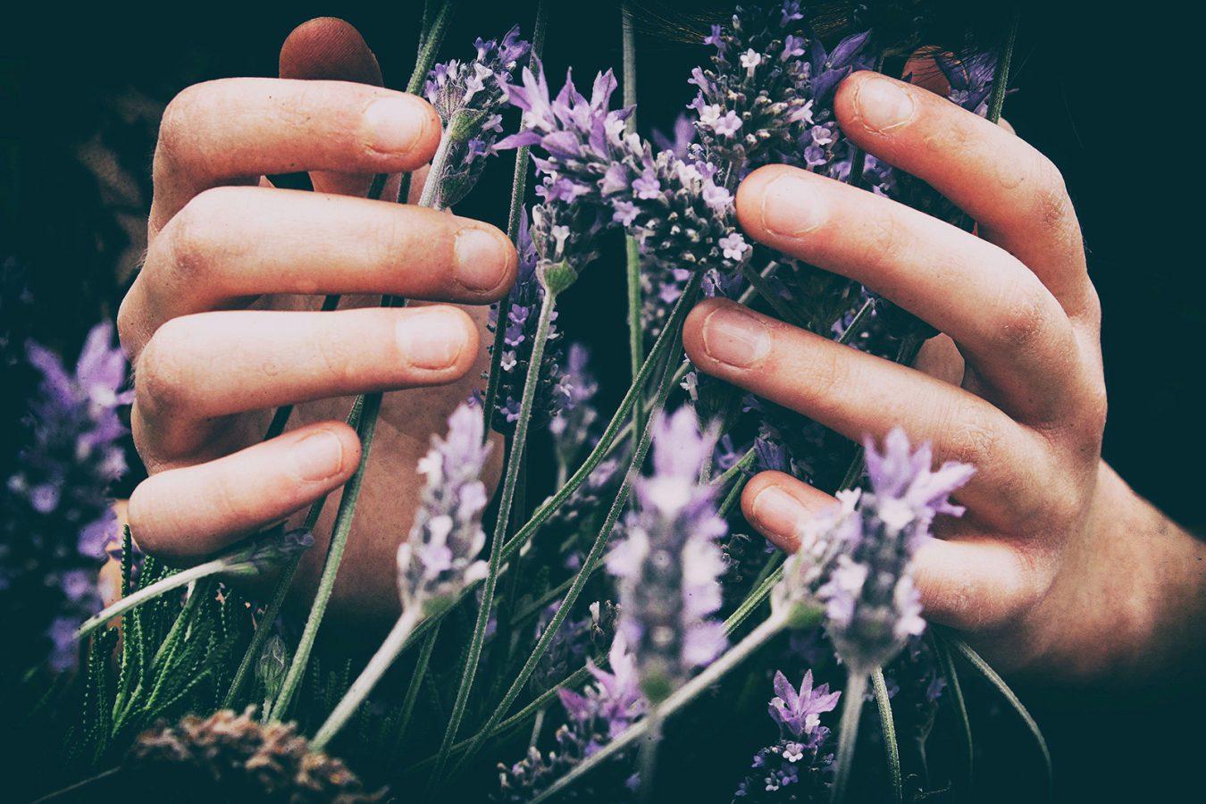 Hands holding lavender - Reiki healing